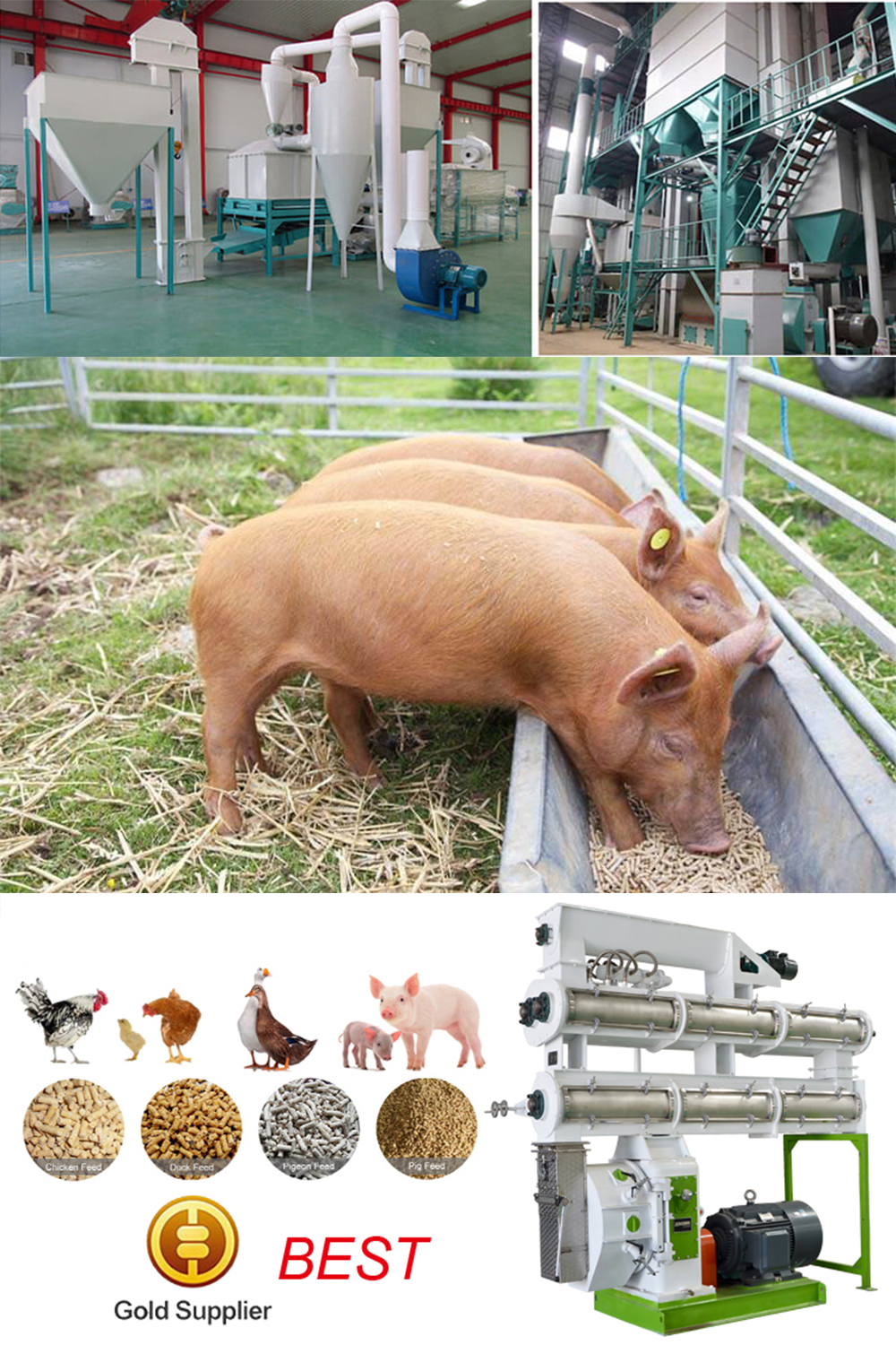 Poultry Feed Pellet Machine Application For Pig Breeding