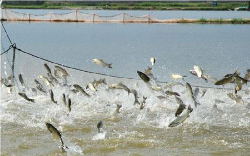 Industrialization Of Fishery Farming