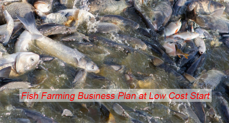 Fish Farming Business Plan At A Low Cost Start