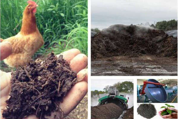 What Processes To Build A Chicken Manure Organic Fertilizer Production Line