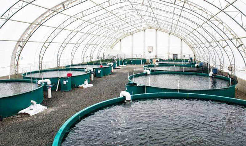 What Equipment Needed For Fish Farming