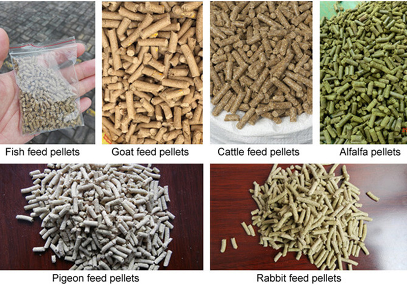 Talk About Feed Pellet Machine Feed Processing Equipment