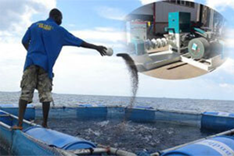 How Profitable Is The Fish Farming Business