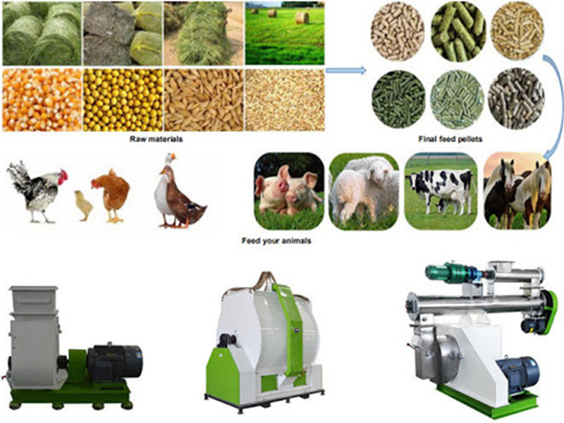 The Best Animal Feed Pellet Machine On Sale